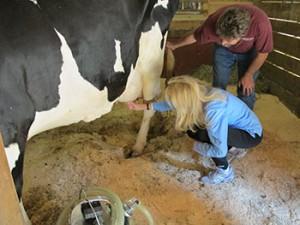 Jane Milking a Cow